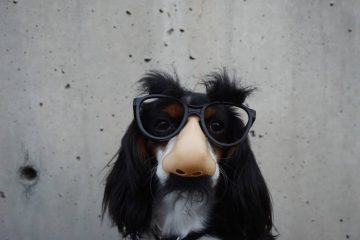 Dog wearing comedy disguise glasses, nose and moustache because tansformational coaching helps us see things differently